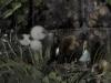 alice-in-wonderland-croquis-013