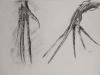 edward-scissorhands-croquis-022