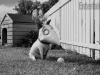 frankenweenie-movie_510