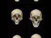 colin-shulver-skulls-1