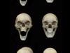colin-shulver-skulls-2