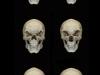 colin-shulver-skulls-3