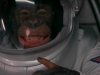 planet-of-the-apes-014