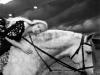 sleepy-hollow-tournage-052